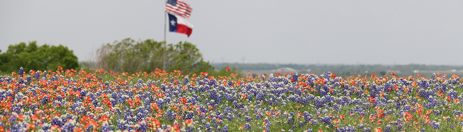 field of bluebonnets and red flowers with US flag and TX flag